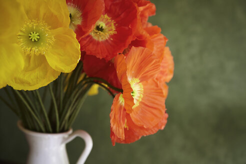 Hamburg, Close up of red and yellow poppy in vase - TLF000549