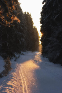 Germany, Braunlage, Road with fir forest in winter - HKF000343