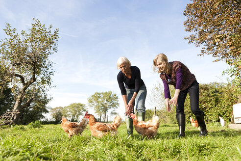 Germany, Saxony, Women together trying to catch hens in the farm - MBF001041