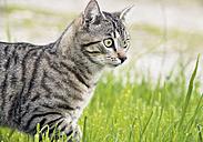 Germany, Cat in meadow - WBF000207