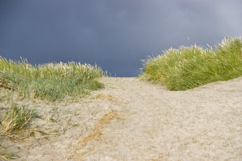 Denmark, Vrist, View of sand dunes with grass - HKF000298