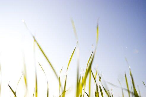 Germany, Vechelde, Grass against sky - HKF000309