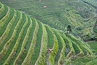 China, Loncheng, View of terraced rice field - HK000315