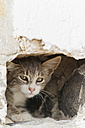 Europe, Greece, Cyclades, Santorini, Cat in hole - FOF002574