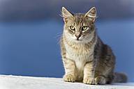 Europe, Greece, Cyclades, Santorini, Cat sitting on wall - FOF002584