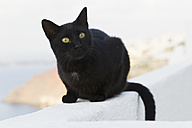 Europe, Greece, Cyclades, Santorini, Cat in the streets of Oia - FOF002603