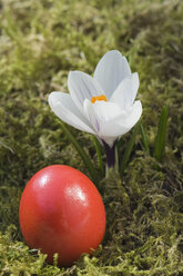 Germany, Bavaria, Crocus and easter egg on grass, close up - CRF001963