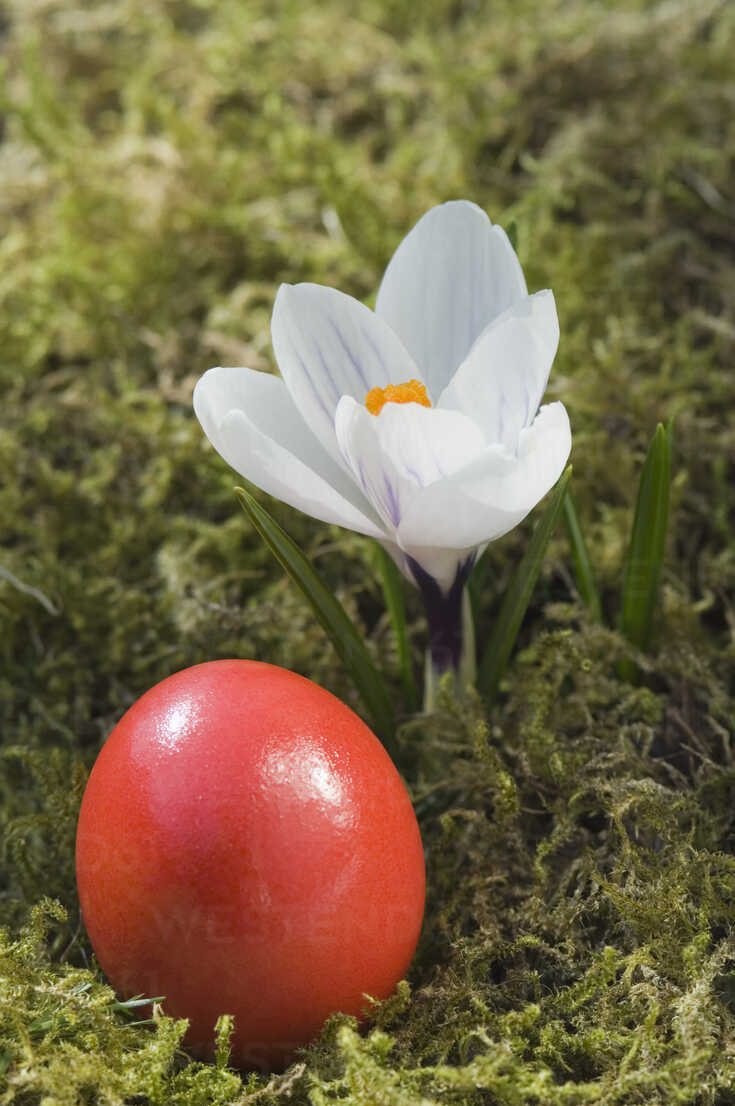 Germany, Bavaria, Crocus and easter egg on grass, close up - CRF001963 - Claudia Rehm/Westend61