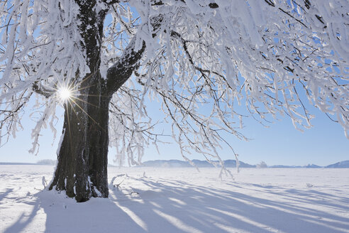 Europe, Switzerland, Canton of Zug, View of tree on snowy landscape - RUEF000628