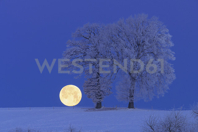 Europe, Switzerland, Canton of Bern, Hoar-frost on tree at night - RUEF000634