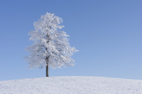 Europe, Switzerland, Canton of Zug, View of tree on snowy landscape - RUEF000539