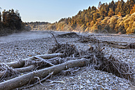 Germany, Upper Bavaria, Geretsried, Isar river, Fallen trees at gravel bank - SIEF000070