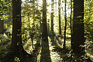Europe, Germany, Upper Bavaria, View of forest at sunset - TCF001402