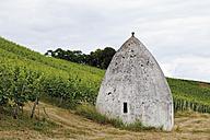 Europe, Germany, Rhine Hesse, View of vineyard with trullo house - CS014666