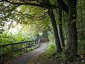 Austria, Salzburg, View of forest in autumn - WWF001867