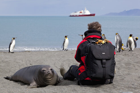 South Atlantic Ocean, United Kingdom, British Overseas Territories, South Georgia, St. Andrews Bay, Mature man with seal and penguins in background - FOF003107