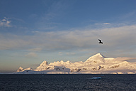 South Atlantic Ocean, Antarctica, Antarctic Peninsula, Lemaire Channel, View of gull flying over snow coverd mountain range - FOF003308