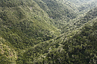Spain, Canary Islands, La Gomera, View of forest in garajonay national park - SIEF001039