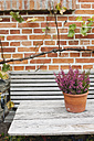 Germany, Kratzeburg, Potted plant and bench at garden near country house - WESTF016589