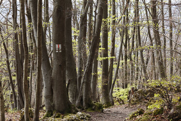 Germany, Bavaria, Franconia, Franconian Switzerland, Muggendorf, View of hiking trail in deciduous forest - SIEF001436
