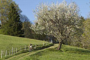 Germany, Bavaria, Chiemgau, Woman mountain biking - FFF001154