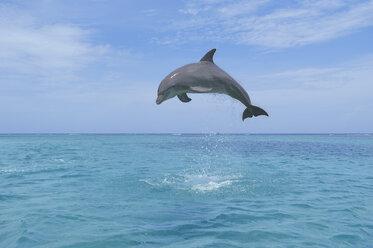 Latin America, Honduras, Bay Islands Department, Roatan, Caribbean Sea, View of bottlenose dolphin jumping in seawater - RUEF000661