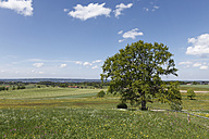 Germany, Bavaria, Upper Bavaria, Muensing, View of oak tree in meadow with lake Starnberg in background - SIEF001555