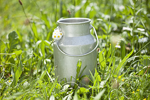 Germany, Close up of milk churn with daisy on grass - MAEF003353
