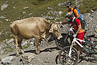 Italy, Livigno, View of woman and man with mountain bike petting cow - FFF001172