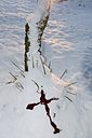 Europe, Germany, Crime scene with bloodstained cross in snow - AWD000635