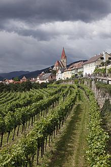 Austria, Lower Austria, Wachau, Weissenkirchen in der Wachau, View of town with vineyard in foreground - SIEF001679