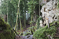 Germany, Rhineland-Palatinate, Eifel Region, South Eifel Nature Park, View of bunter rock formations at beech tree forest - GWF001526