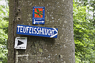 Germany, Rhineland-Palatinate, Eifel Region, South Eifel Nature Park, Close up of information sign on tree trunk at beech tree forest - GWF001538