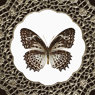 Collage of doily and butterfly, close up - TL000601