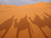 North Africa, Morocco, Merzouga, Shadows of a caravan with camels and tourists on sand - BSCF000075