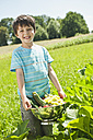 Germany, Bavaria, Boy holding vegetables in garden, smiling, portrait - WESTF017715