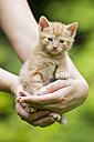 Germany, Mature woman holding Kitten, close up - FOF003623