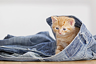 Germany, Kitten sitting in jeans, close up - FOF003673