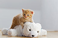 Germany, Kitten sitting on polar bear - FOF003659