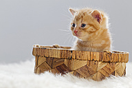 Germany, Kitten sitting in box, close up - FOF003662
