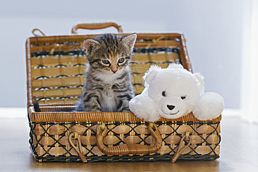 Germany, Kitten with soft toy in box, close up - FOF003663