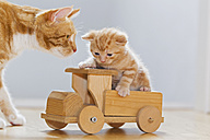 Germany, Cat looking at kitten sitting on wooden toy - FOF003665