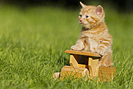 Germany, Ginger kitten sitting on wooden toy, close up - FOF003675