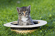 Germany, Kitten sitting in hat, close up - FOF003682
