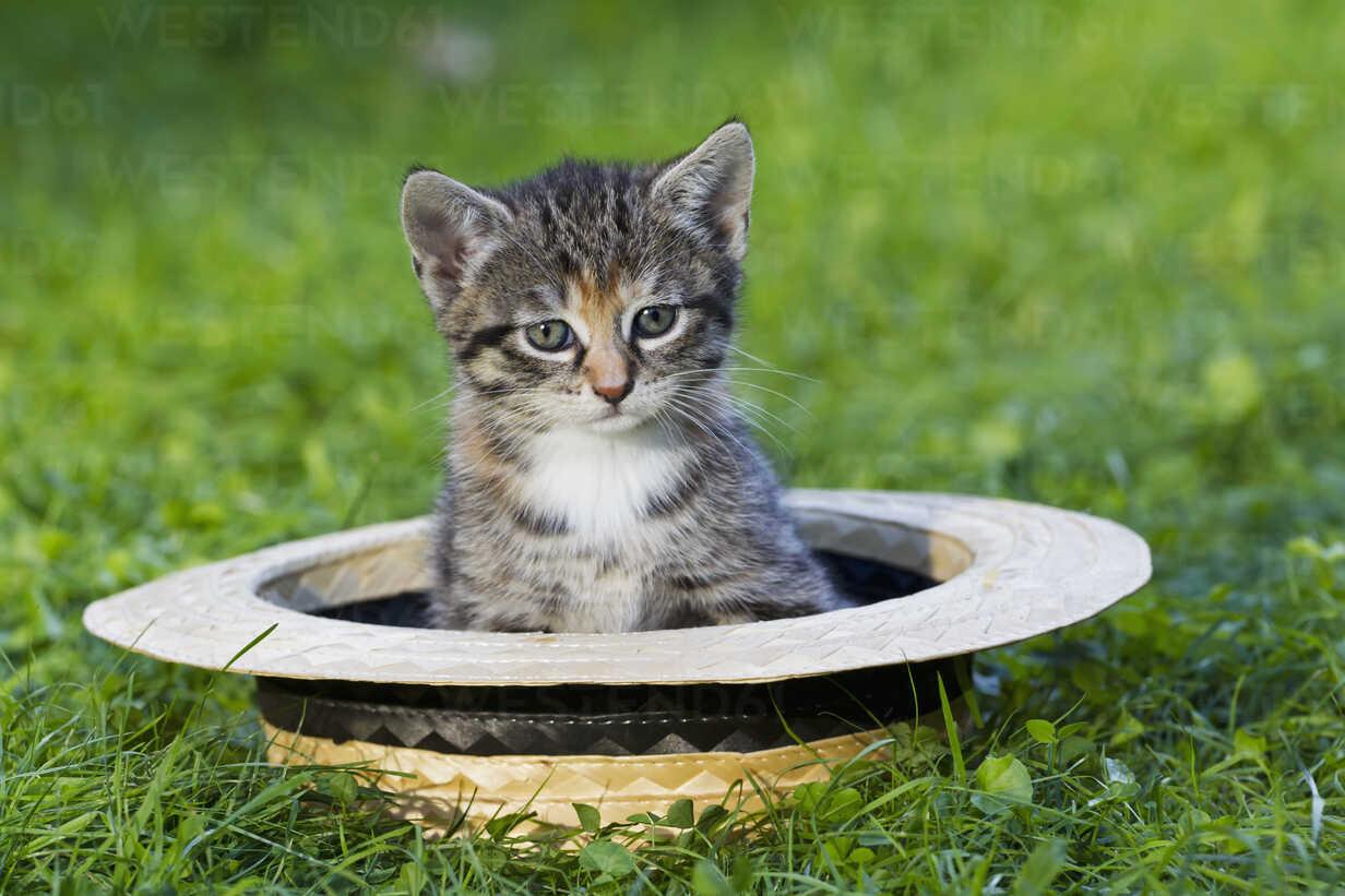 Germany, Kitten sitting in hat, close up - FOF003682 - Fotofeeling/Westend61