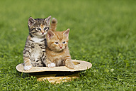 Germany, Kittens sitting in hat, close up - FOF003684