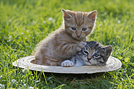 Germany, Kittens sitting in hat, close up - FOF003685