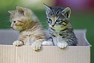 Germany, Kittens in cardboard box - FOF003687