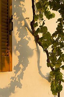 Greece, Ionian Islands, Ithaca, Vine with window, close up - MUF001149
