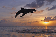 Latin America, Honduras, Bay Islands, Roatan, Bottlenose dolphin jumping in caribbean Sea - RUEF000718